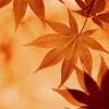 漫步在秋天, 虽有凉意,却也缠绵, 引人思绪万千。